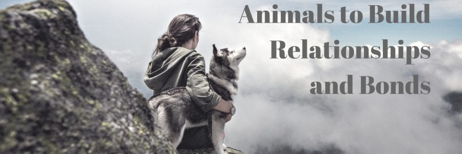 Healing by Using Animals to Build Relationships and Bonds